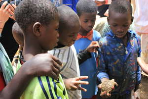 Talibe children marvelling at a turtle