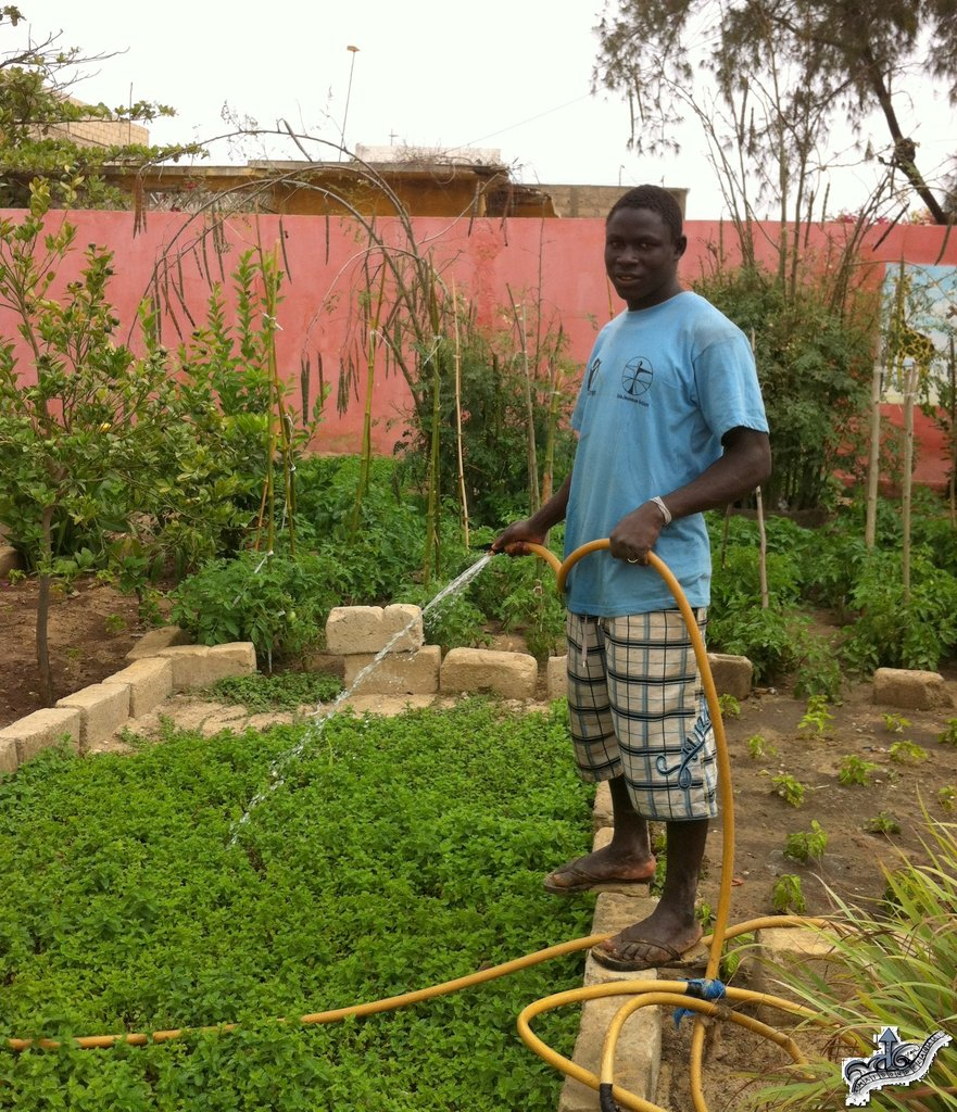 Mamadou watering mint, lovingly tending the garden