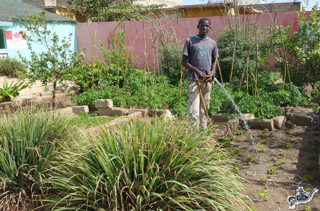 Ablaye is a faithful garden helper