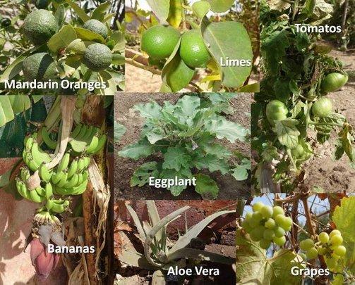 The produce of Maison de la Gare
