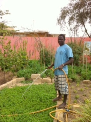 Watering the mint crop