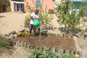 Preparing the soil for a new planting of beans
