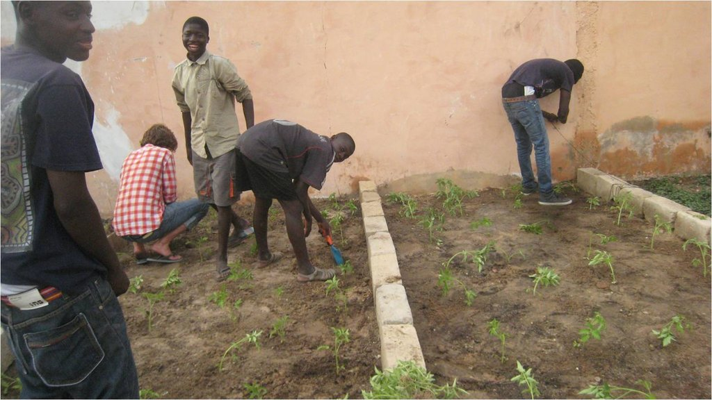 Talibe gardeners planting their first crop ever