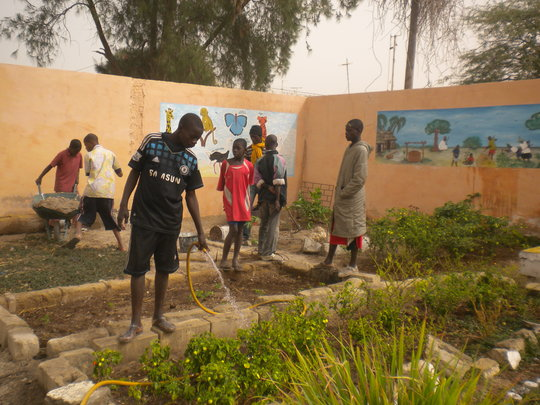 Talibe children caring for garden in MDG centre