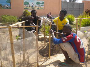 Talibes helping MDG staff protect new fruit trees