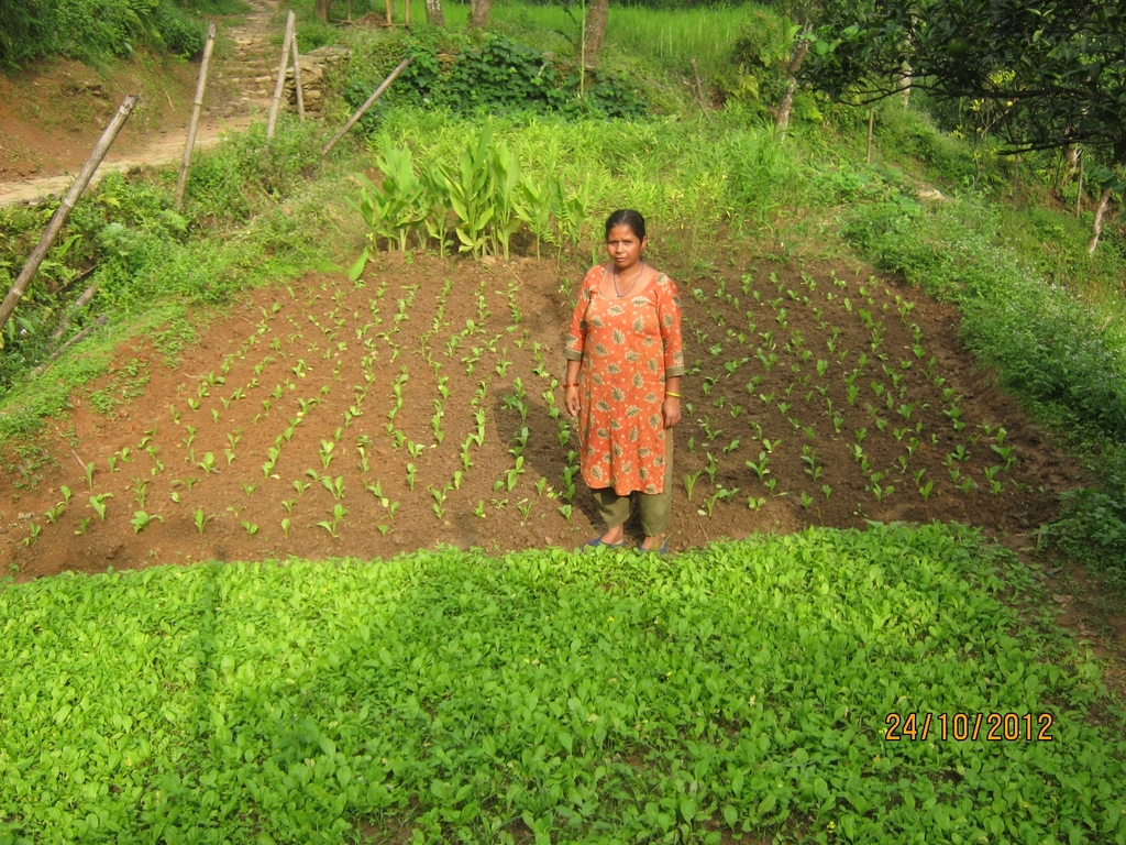 Cook mother in    the kitchen garden