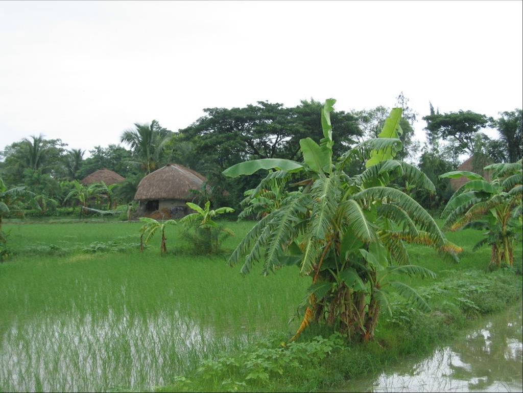 Monsoon beauty in Bengal