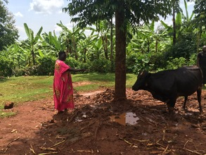 Esther and one of her cows