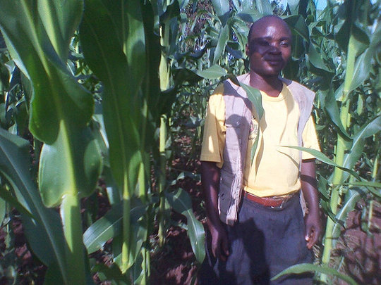 CKW Wilson Kyalissima in his field of maize