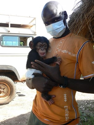 Orphan chimp Toto & researcher Michel Sadiakho