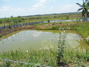 Fish pond (tilapia) project