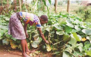 Girl checking her kitchen garden