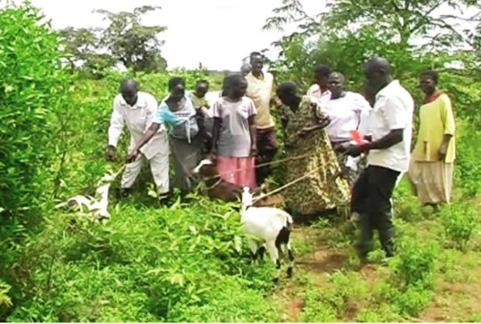Goat project - 4th distribution