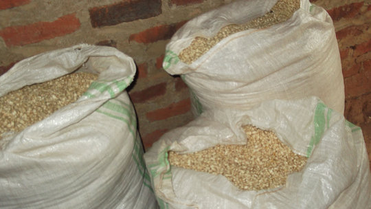Maize (corn) to be milled for PLWA