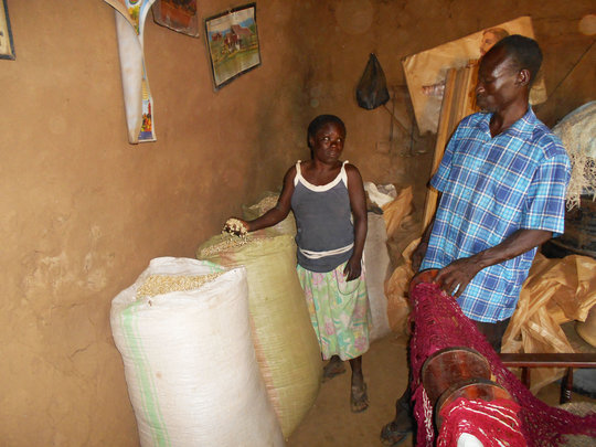 Margaret checking her maize