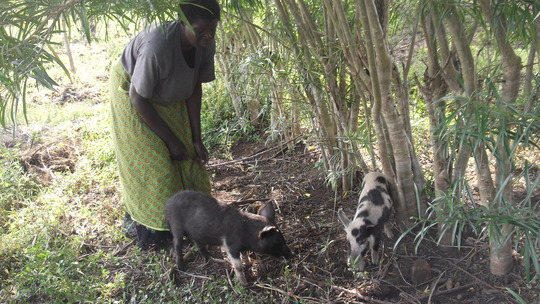 Grace, a project recipient tending to her pigs.