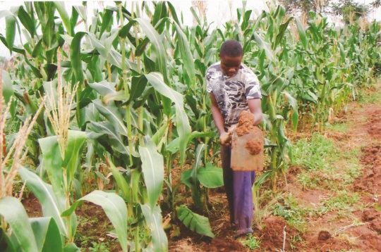 Project member weeding her garden with hoe