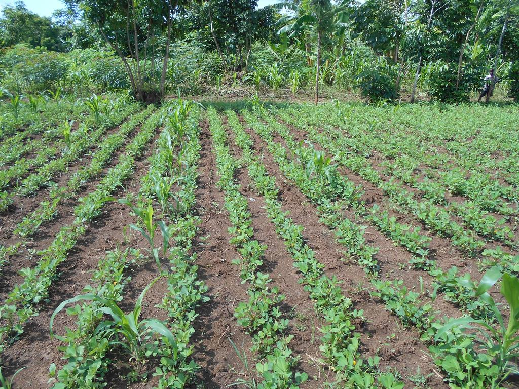 Reports on empower aids widows save a community for Large vegetable garden