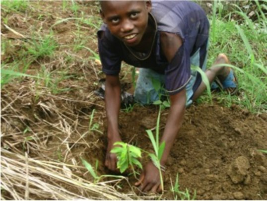 A child joins in the tree planting