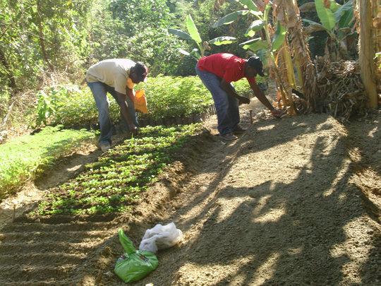 Bethel nursery maintenance by community members