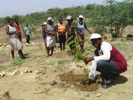Women's group planting trees
