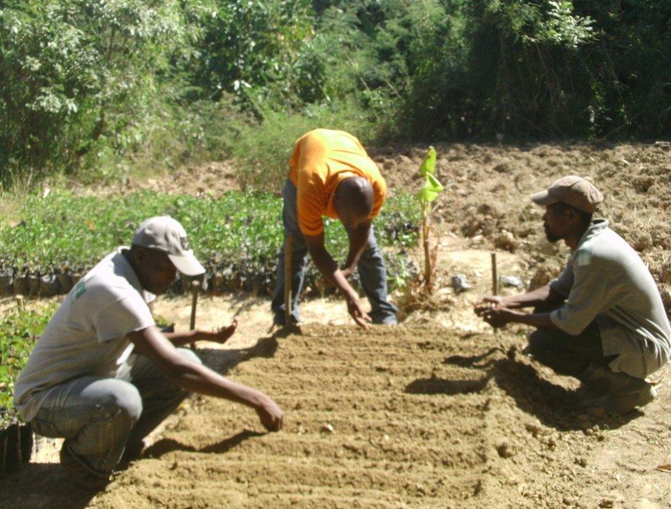 Community members sow seeds in their nursery.