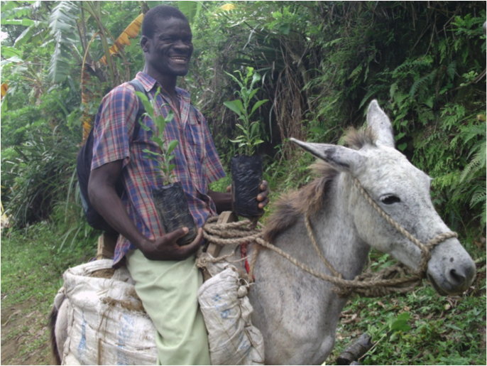 A Bethel farmer transports seedlings for planting
