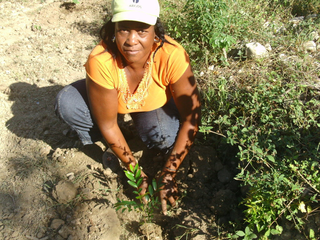 Bethel tree planting in action