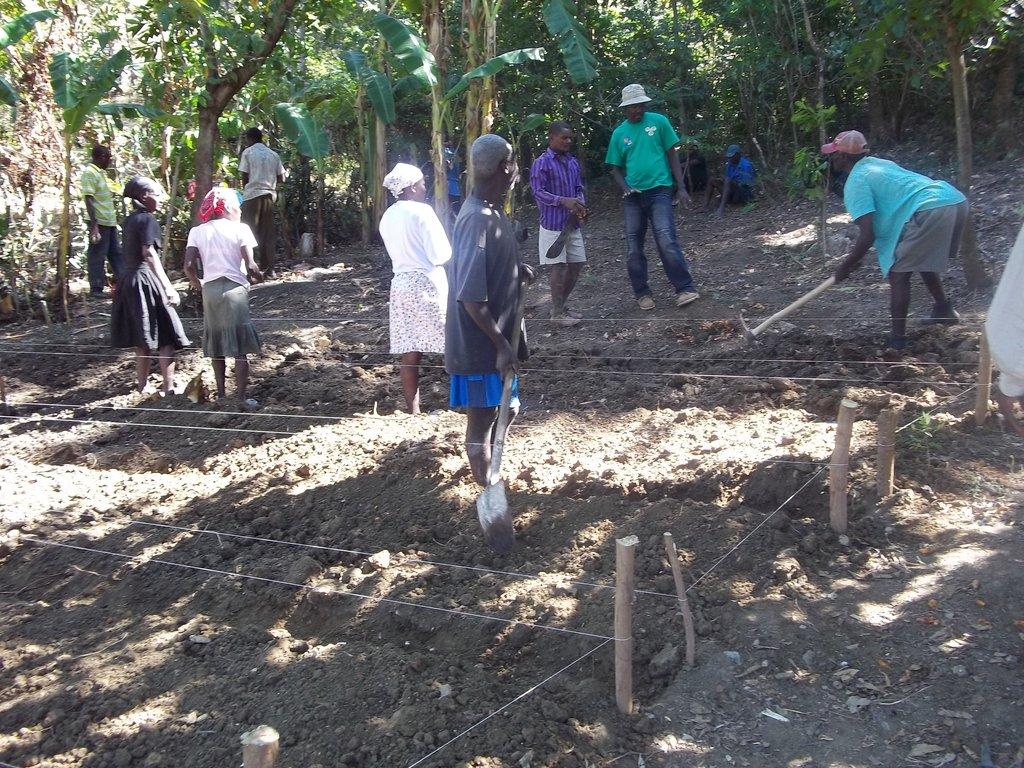 Help Reforest the Barren Lands of Haiti!