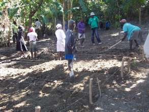 Farmers At Work after Receiving Training in Haiti