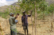 Help Reforest the Barren Lands of Haiti!