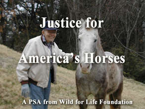 Justice for America's Horses