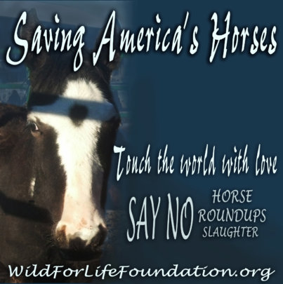 Saving America's Horses Educational & DVD Release
