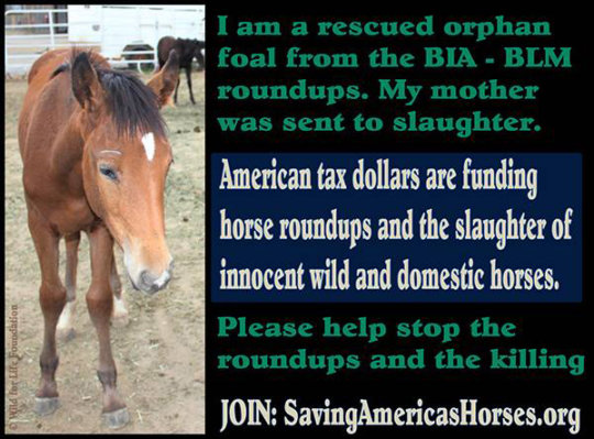 Raise awareness for protection of America's horses