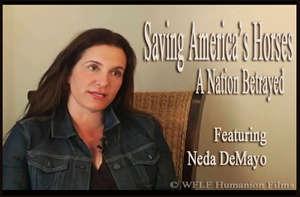 Neda DeMayo