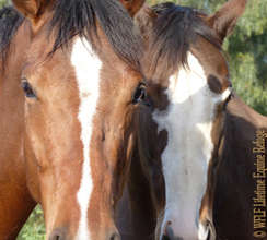 WFLF Equine Rescue and Education