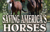 Saving America's Horses Educational & DVD Release