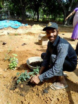 Planting of new saplings