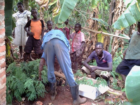 1 - 2 Million Trees a Year in Uganda's Countryside