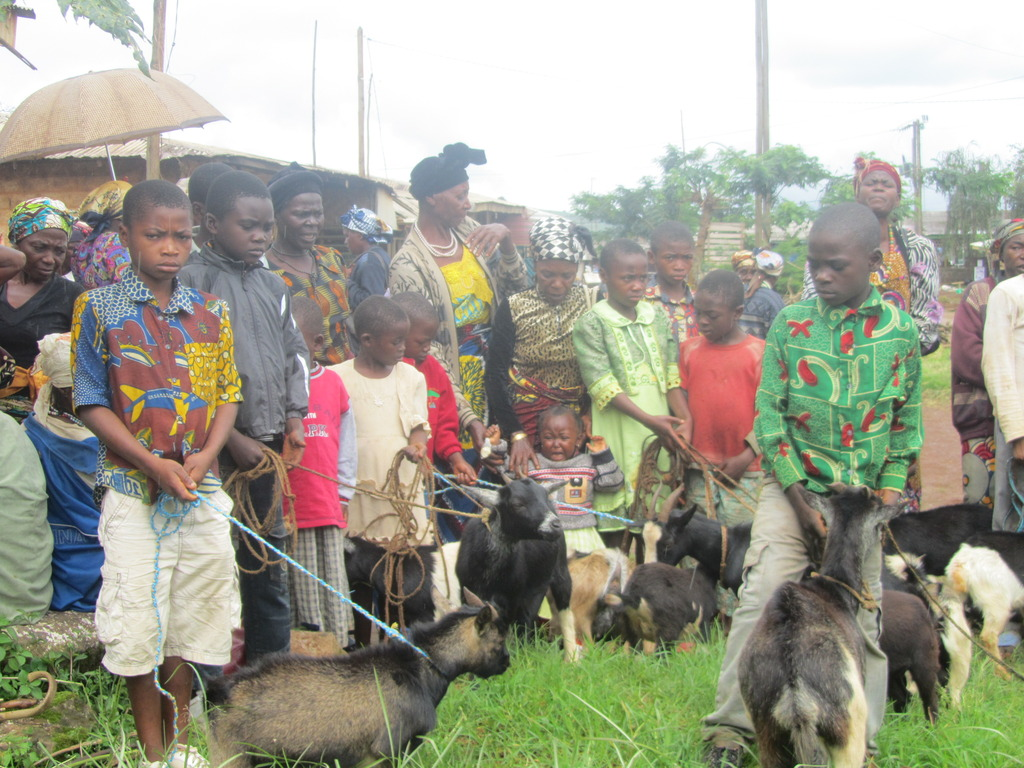 Primary-level orphans receiving their goats