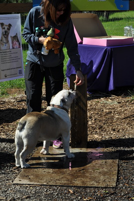 Dog Enjoying New Water Feature
