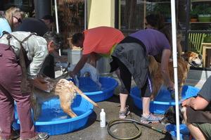 Doggie Wash Event at New Seasons Market