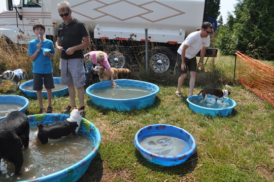 Pool Party at Bark in Park event