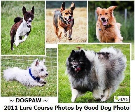 DOGPAW's Happy Dog Campaign