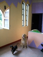 Pancho in the upper area admiring our paint job!