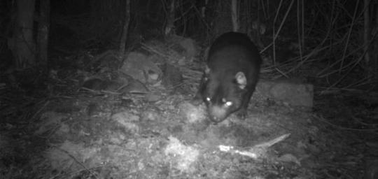 Camera Trap Monitoring