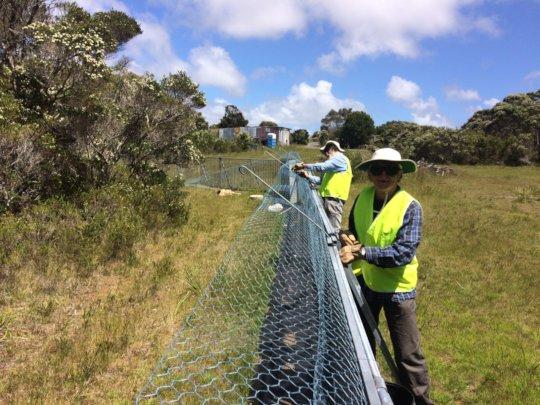 Volunteers dismantling devil releasing yards