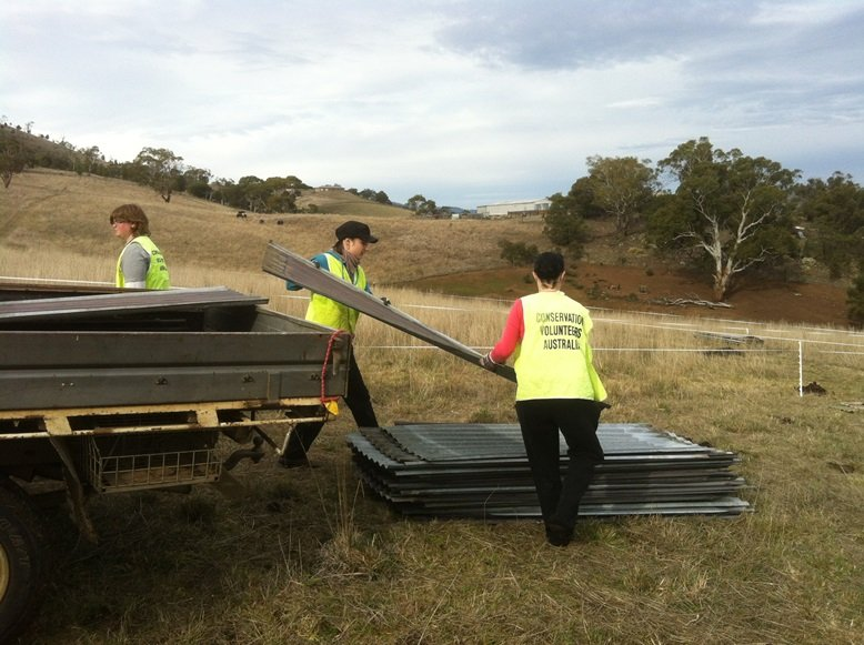 Volunteers hard at work in chilly Tasmania