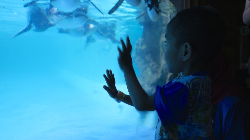 Teguh at the Aquarium