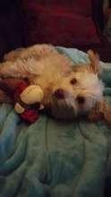 BG Resting in Bed
